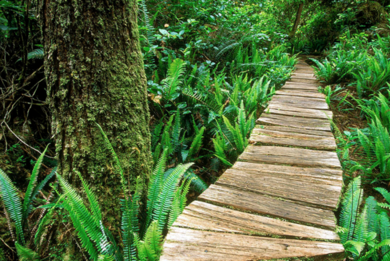 Meares Island Trail – (Big Tree Trail)