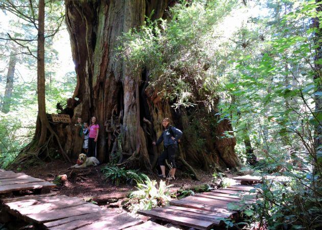 Old Big Tree Trail (Rainforest Trail)